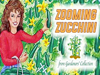 Zooming Zucchini Plants